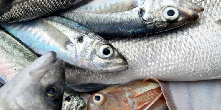 A fine kettle: How fishing became the issue that could sink a post-Brexit U.K.-EU trade deal