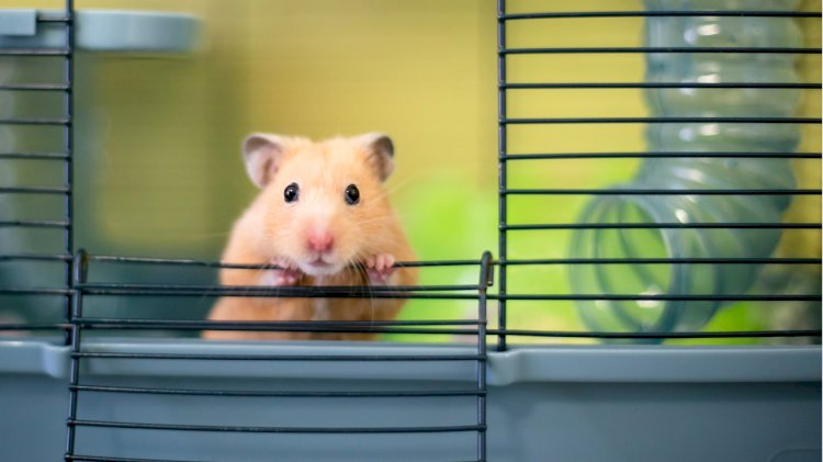 Cryptocurrency-Trading Hamster Outperforms Bitcoin, S&P 500 Since June